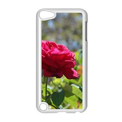 RED ROSE 1 Apple iPod Touch 5 Case (White)