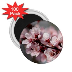 PLUM BLOSSOMS 2.25  Magnets (100 pack)