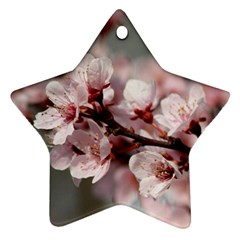 PLUM BLOSSOMS Star Ornament (Two Sides)