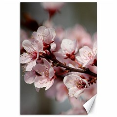 Plum Blossoms Canvas 12  X 18