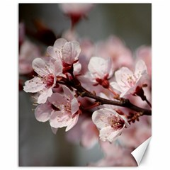 PLUM BLOSSOMS Canvas 11  x 14