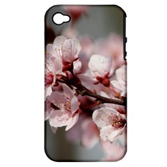 PLUM BLOSSOMS Apple iPhone 4/4S Hardshell Case (PC+Silicone)