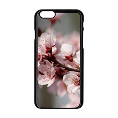 Plum Blossoms Apple Iphone 6/6s Black Enamel Case