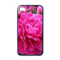 PAEONIA ELEANOR Apple iPhone 4 Case (Black)