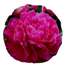 PAEONIA ELEANOR Large 18  Premium Round Cushions