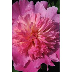 PAEONIA CORAL 5.5  x 8.5  Notebooks