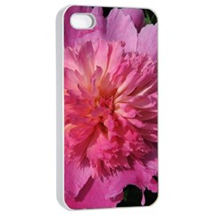 PAEONIA CORAL Apple iPhone 4/4s Seamless Case (White)
