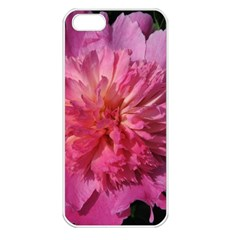 PAEONIA CORAL Apple iPhone 5 Seamless Case (White)