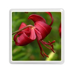 Lilium Red Velvet Memory Card Reader (square)