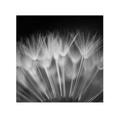 Dandelion Small Satin Scarf (square)