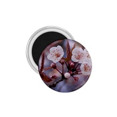 CHERRY BLOSSOMS 1.75  Magnets