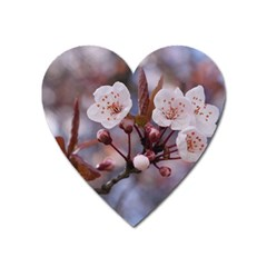 Cherry Blossoms Heart Magnet