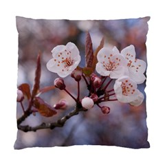 CHERRY BLOSSOMS Standard Cushion Cases (Two Sides)
