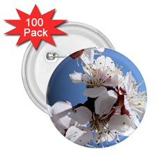APRICOT BLOSSOMS 2.25  Buttons (100 pack)