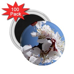APRICOT BLOSSOMS 2.25  Magnets (100 pack)