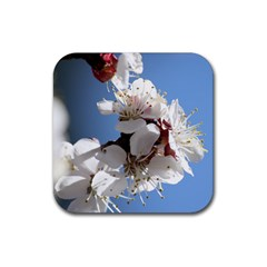APRICOT BLOSSOMS Rubber Square Coaster (4 pack)