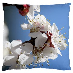Apricot Blossoms Standard Flano Cushion Cases (one Side)