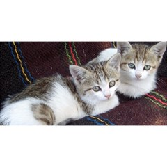 Kitty Twins You Are Invited 3d Greeting Card (8x4)