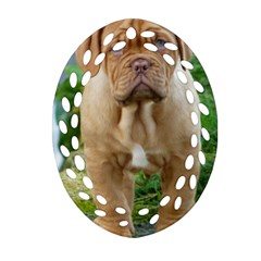 Cute Wrinkly Puppy Ornament (oval Filigree)