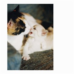 Calico Cat And White Kitty Small Garden Flag (two Sides)