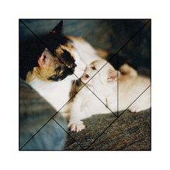 Calico Cat And White Kitty Acrylic Tangram Puzzle (6  X 6 )