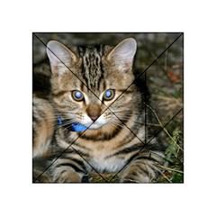 Blue Eyed Kitty Acrylic Tangram Puzzle (4  X 4 )