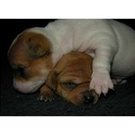 ADORABLE BABY PUPPIES You Did It 3D Greeting Card (7x5) Back