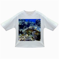 Sea Turtle Infant/toddler T Shirts