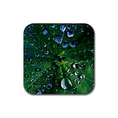 Morning Dew Rubber Square Coaster (4 Pack)
