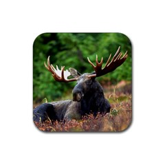 Majestic Moose Drink Coaster (square)