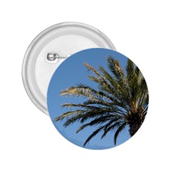 Tropical Palm Tree  2 25  Buttons