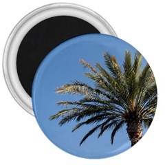 Tropical Palm Tree  3  Magnets