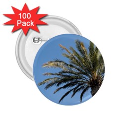 Tropical Palm Tree  2 25  Buttons (100 Pack)