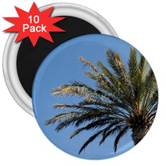 Tropical Palm Tree  3  Magnets (10 Pack)