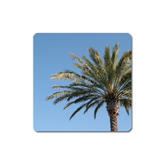 Tropical Palm Tree  Square Magnet