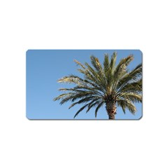 Tropical Palm Tree  Magnet (name Card)