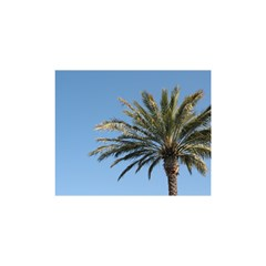 Tropical Palm Tree  Shower Curtain 48  x 72  (Small)