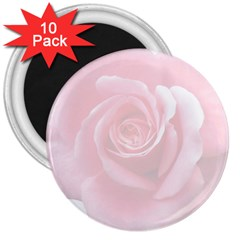 Pink White Love Rose 3  Magnets (10 pack)