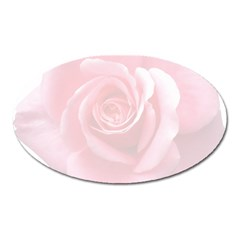 Pink White Love Rose Oval Magnet