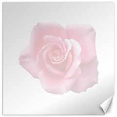 Pink White Love Rose Canvas 12  x 12