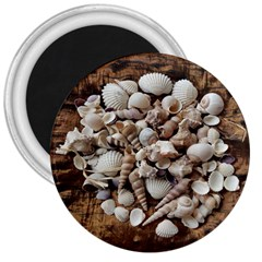 Tropical Sea Shells Collection, Copper Background 3  Magnets