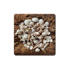 Tropical Sea Shells Collection, Copper Background Square Magnet