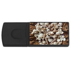 Tropical Sea Shells Collection, Copper Background USB Flash Drive Rectangular (4 GB)