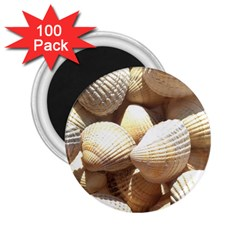 Tropical Exotic Sea Shells 2 25  Magnets (100 Pack)