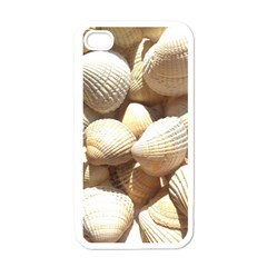 Tropical Exotic Sea Shells Apple iPhone 4 Case (White)