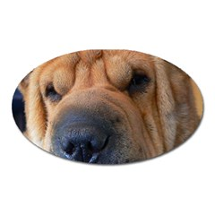 Shar Pei / Chinese Shar Pei Oval Magnet