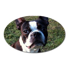 Boston Terrier Oval Magnet