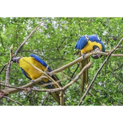 South American Couple Of Parrots Birthday Cake 3D Greeting Card (7x5)