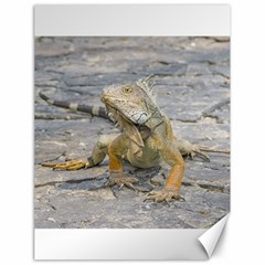 Young Iguana Canvas 18  x 24
