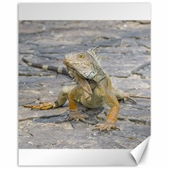 Young Iguana Canvas 11  x 14